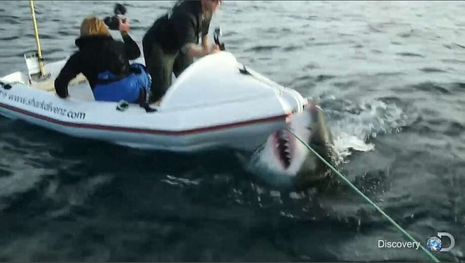 New Zealand Attack Video Wikipedia: Great White Shark Attacks Boat