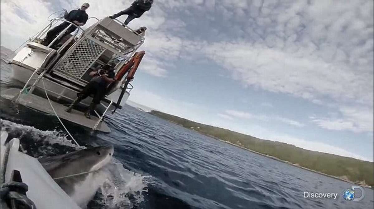 """Harrowing footage from a Discovery Channel documentary on sharks that aired last year is being used by some shark conservationists to point the mistreatment of the predators in the wild. The filmmakers behind the channel's """"Lair of the Megashark"""" documentary were shooting footage off of the coast of New Zealand's Stewart Island when a sizable duo of great white sharks began nudging and presenting themselves rather aggressively next to a tiny, two-man vessel being used for filming."""