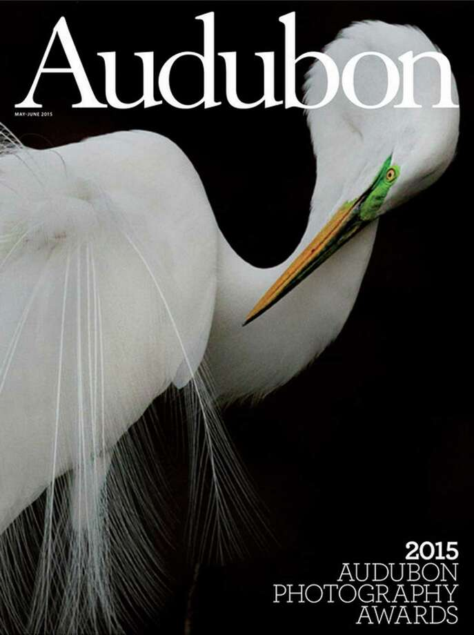 Photographer Melissa Groo's image of a Great Egret taken in Port Richey, Fla. won the grand prize in the 2015 Audubon Photography Awards and is featured on the cover of the May-June 2015 issue of Audubon Magazine. Photo: Contributed Photo / Greenwich Time Contributed Photo