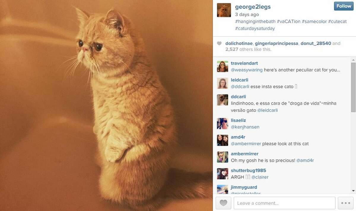 Grumpy Cat has held the ranks of the most popular internet cat for a while but another furry critter is the cat's pajamas and he's an Austinite. Meet George, also known as