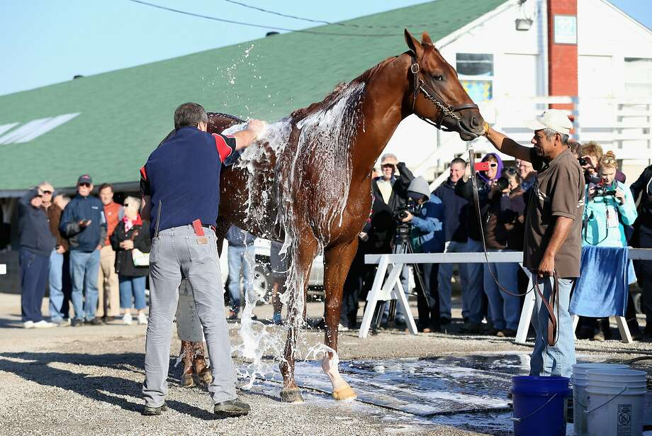 LOUISVILLE, KY - APRIL 28:  Dortmund is washed during the morning training for the Kentucky Derby at Churchill Downs on April 28, 2015 in Louisville, Kentucky.  (Photo by Andy Lyons/Getty Images) Photo: Andy Lyons, Getty Images