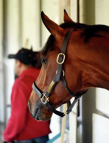 Locally foaled Derby entrant Tencendur looks out of his stall in the barn area of Churchill Downs Tuesday morning, April 28, 2015, in Louisville, Ky. The 141st running of The Kentucky Derby starts Saturday.  (Skip Dickstein/Times Union) Photo: SKIP DICKSTEIN
