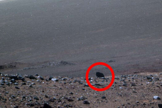 A buffalo on Mars?What about now? Are buffalo at home on the range of Mars? The alien observers at UFO Sightings Daily say this Mars rover image shows a lonely buffalo wandering the wide open spaces of the red planet. Photo: NASA