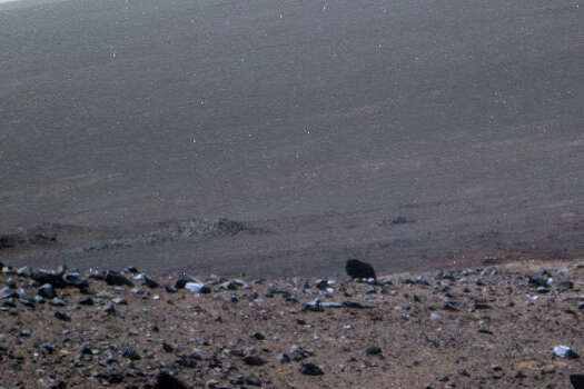 A buffalo on Mars?Are buffalo at home on the range of Mars? The alien observers at UFO Sightings Daily say this Mars rover image shows a lonely buffalo wandering the wide open spaces of the red planet. Can you see it? Photo: NASA
