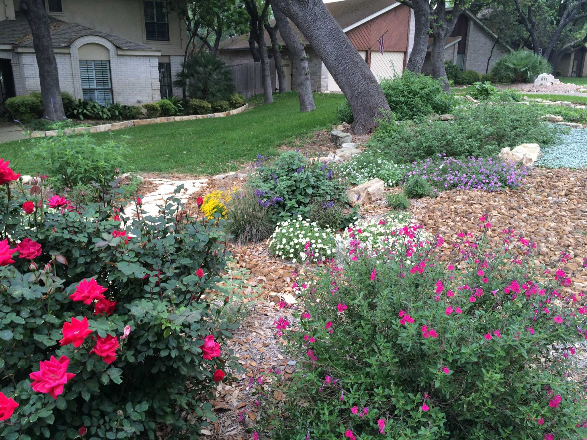 Lose The Grass And Get 100 San Antonio Express News