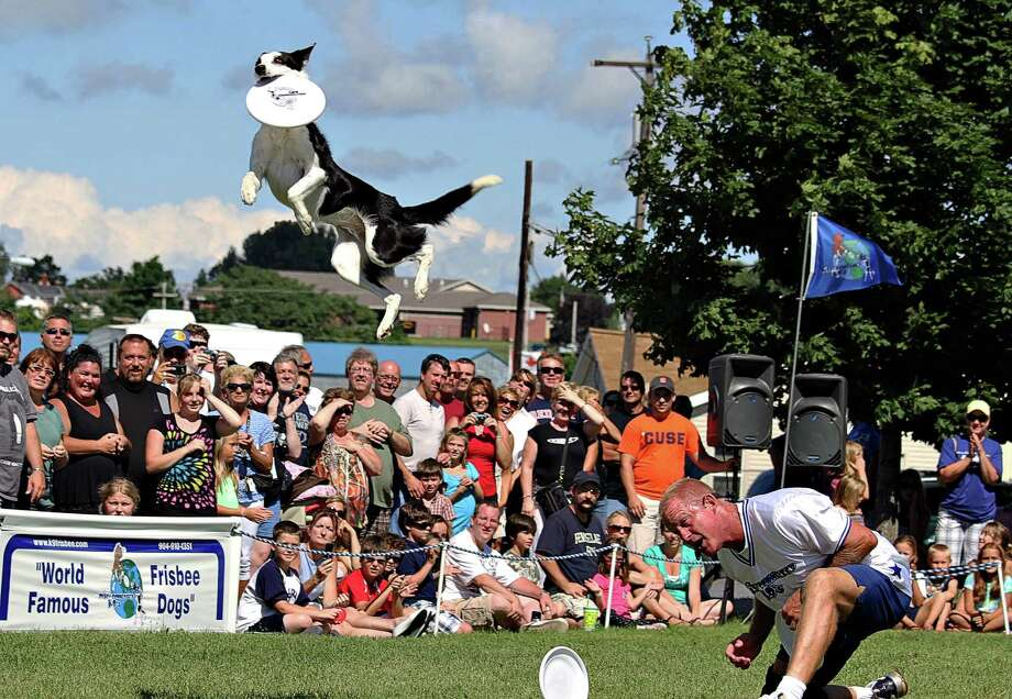 The World Famous Frisbee Dogs will be at the Circles on Sounds Frisbee festival May 9, Saturday, at Seaside Park in Bridgeport. Photo: Contributed Photo / Connecticut Post Contributed