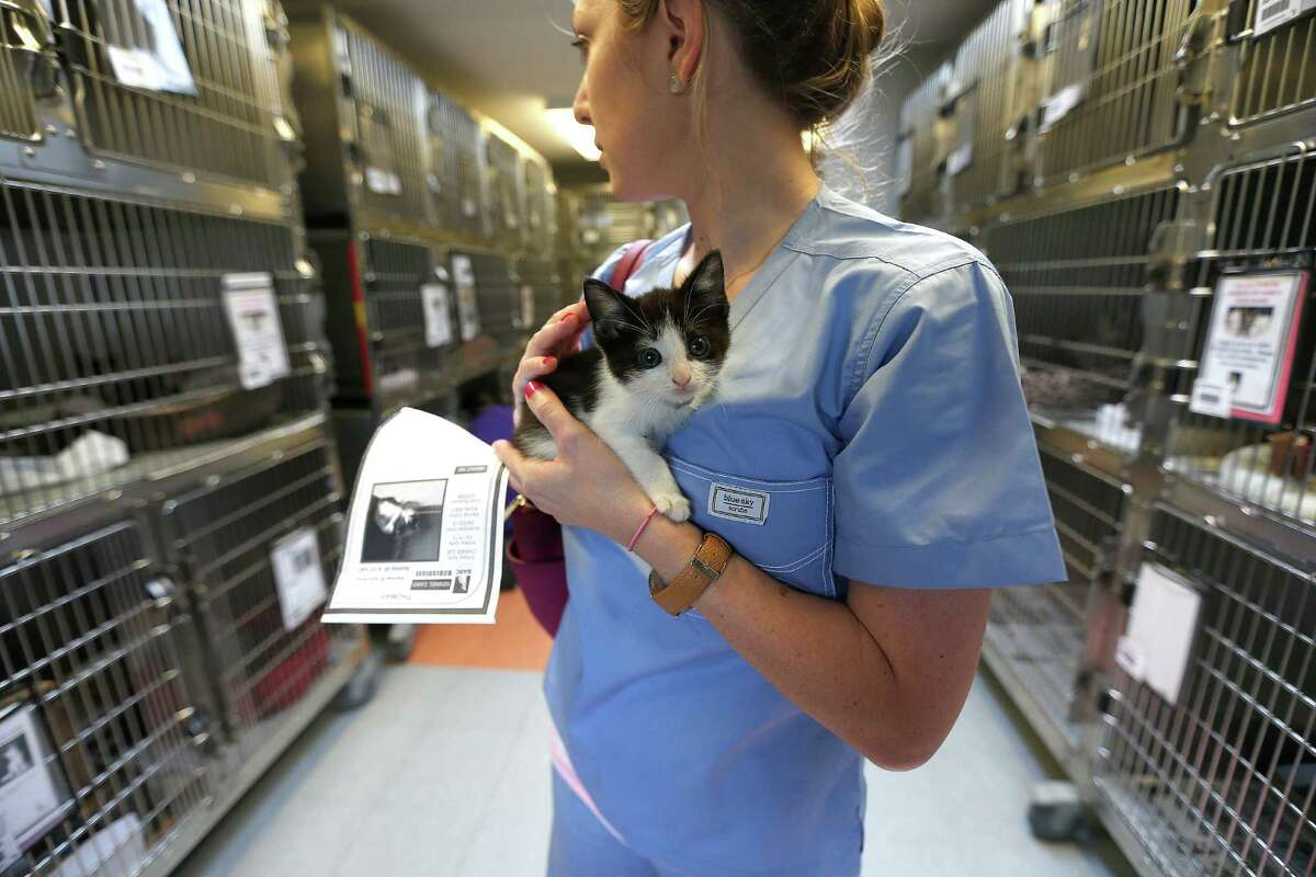Brenna Pickard holds a tuxedo kitten while looking around the kitten room at BARC on Wednesday.