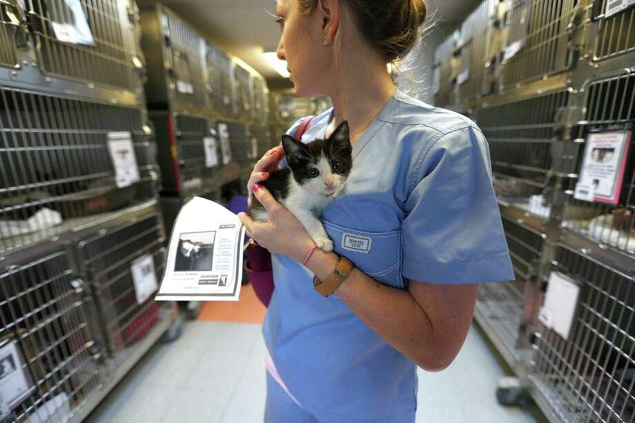 Brenna Pickard holds a tuxedo kitten while looking around the kitten room at BARC on Wednesday. Photo: Karen Warren, Staff / © 2015 Houston Chronicle