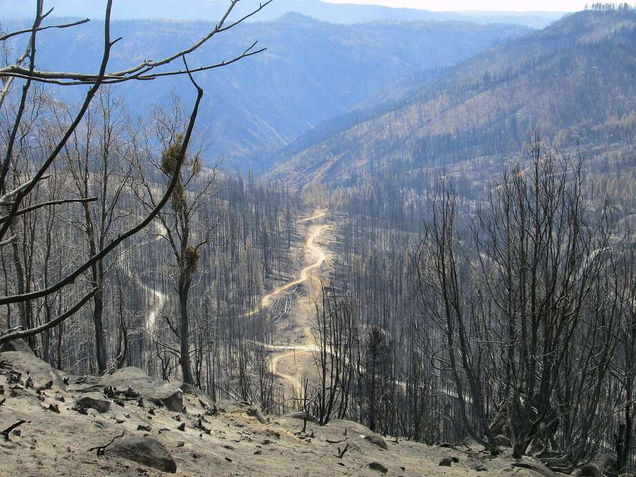 Rim Fire: Miles of matchsticks. Rim burned 402 square miles in the Sierra Nevada foothills near Groveland. The road to Cherry Lake, just reopened after being closed since August of 2013, provides this view. The dirts roads visible are from salvage logging operations. Photo: Tom Stienstra
