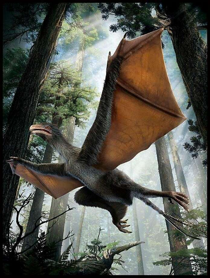 An artist's impression of the newly found dinosaur, called Yi qi, shows the odd, leathery wings as indicated by the fossil. Photo: Courtesy Of Dinostar Co. Ltd