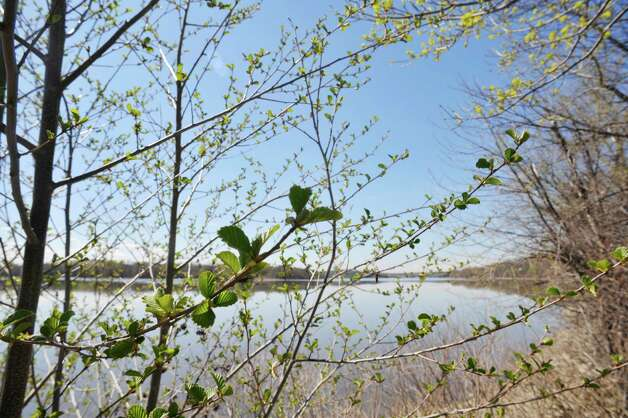 Trees begin to bloom along the Mohawk River  on Thursday, April 30, 2015, in Halfmoon, N.Y.   (Paul Buckowski / Times Union) Photo: PAUL BUCKOWSKI / 00031659A