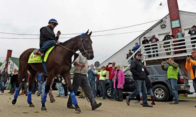 Morning line favorite American Pharaoh goes out for his morning exercise Thursday morning April 30, 2015,  just two days before the 141st Kentucky Derby at Churchill Downs in Louisville, Kentucky.       (Skip Dickstein/Times Union) Photo: SKIP DICKSTEIN