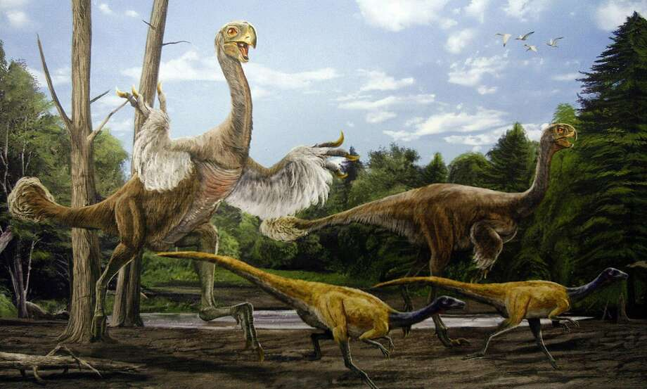 Other Recent Significant Dinosaur Discoveries:An artist's rendering of a Gigantoraptor. The remains of the giant, birdlike dinosaur as tall as the formidable tyrannosaur have been found in China, a surprising discovery that indicates a more complicated evolutionary process for birds than originally thought. Photo: Institute Of Vertebrate Paleonto, NYT