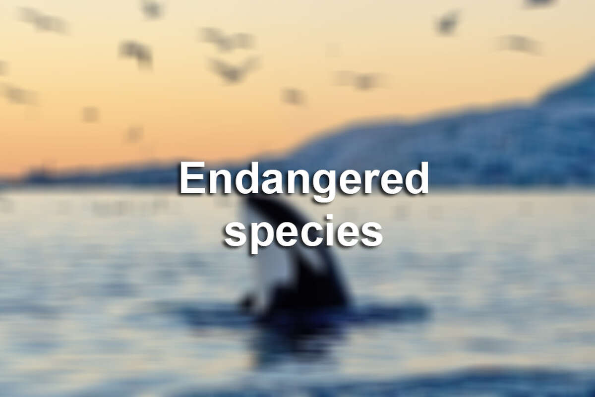 Click through the slideshow to view endangered species around the world.