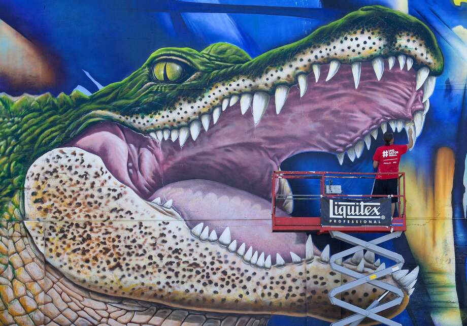 "Artist Sebastien ""Mr. D"" Boileau works on his mural depicting, Ed-U-Gator, the University of Houston-Downtown's mascot, Friday, May 1, 2015, in Houston. The mural will reside on the north side of a storage facility on campus. (Cody Duty/Houston Chronicle via AP) MANDATORY CREDIT Photo: Cody Duty, Associated Press / Houston Chronicle"