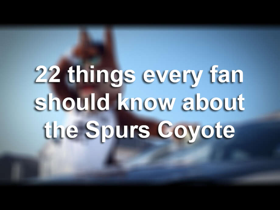 22 things every San Antonio Spurs fan should know about the Coyote Photo: Courtesy Photo
