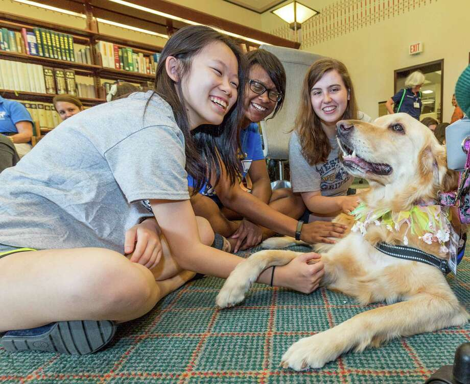 """For the fourth year during final exam days, Rice University students have the opportunity to mingle, de-stress and hug dogs of various breeds April 30 and May 1 at the Rice University Fondren Library, 6100 Main St. The dogs are supplied by the Houston pet therapy organization Faithful Paws sponsored by the Bellaire United Methodist Church. L-R ID: Brenda Zhou, Lauren Williams and Elizabeth Anderson baby """"Andie,"""" a loving Golden Retriever. Friday  May 1, 2015 Photo: Craig Hartley, For The Chronicle / Copyright: Craig H. Hartley"""