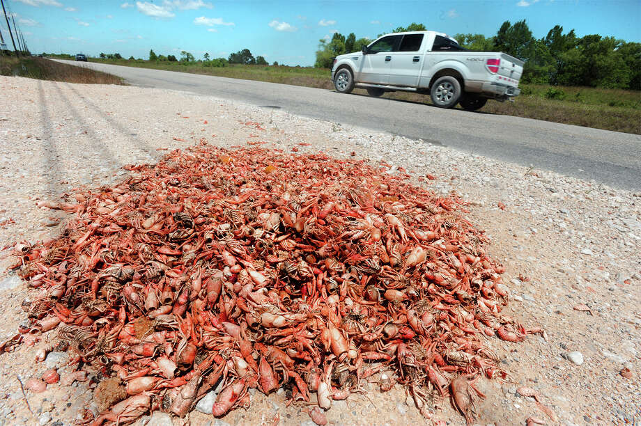 A pile of spent crawfish shells and all the fixings collects bugs and dust on Keith Road Wednesday. The pile had first been spotted Sunday morning.   Photo taken Wednesday, April 29, 2015  Guiseppe Barranco/The Enterprise Photo: Guiseppe Barranco, Photo Editor