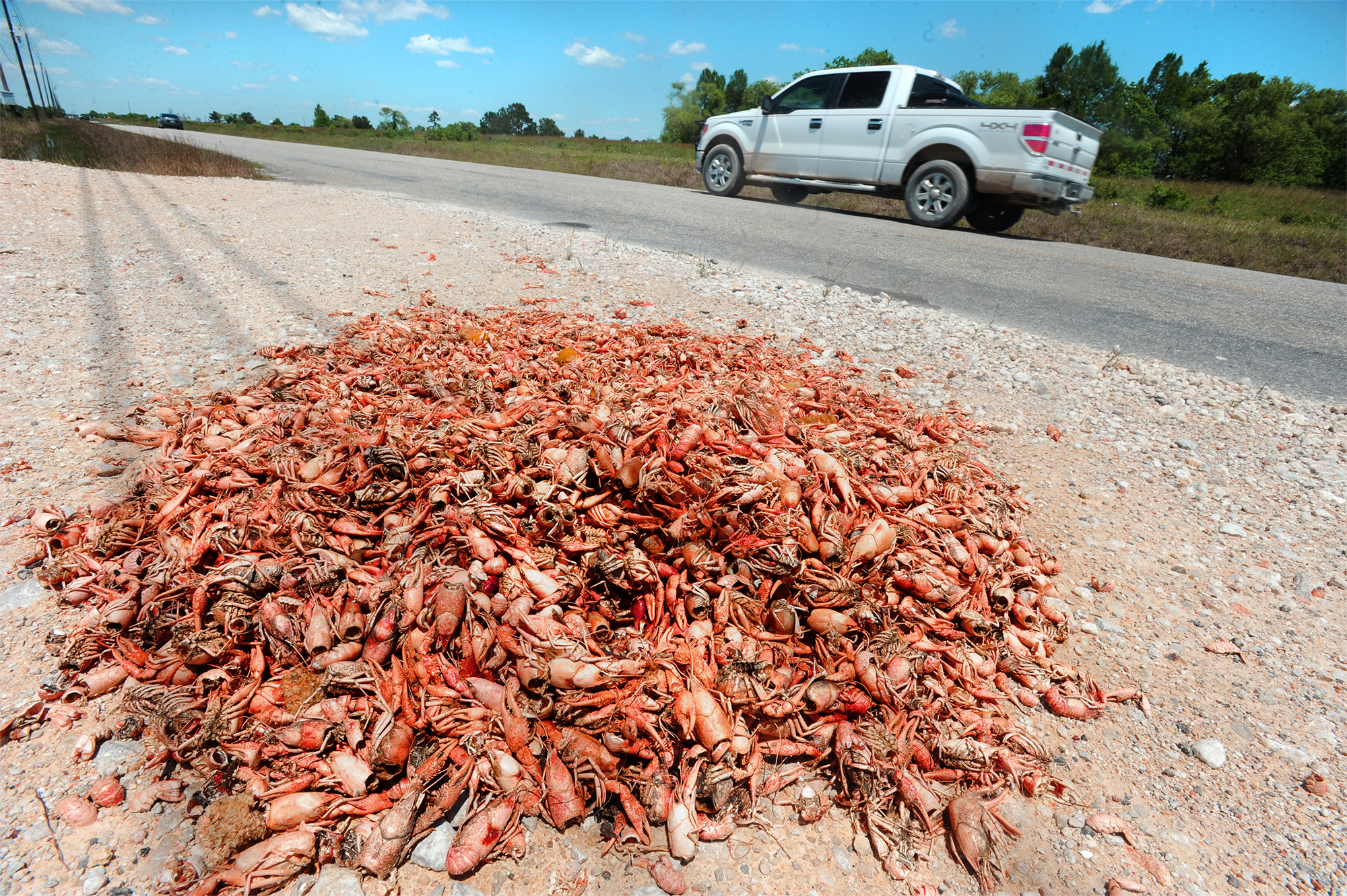 Dumping Crawfish Waste Smelly Problem In Se Texas  Beaumont Enterprise