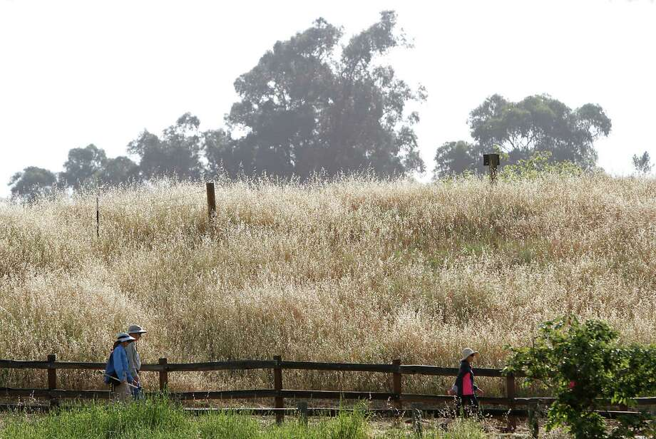 Hikers on the trail at Rancho San Antonio in Cupertino. Photo: Sarah Rice / Special To The Chronicle / ONLINE_YES