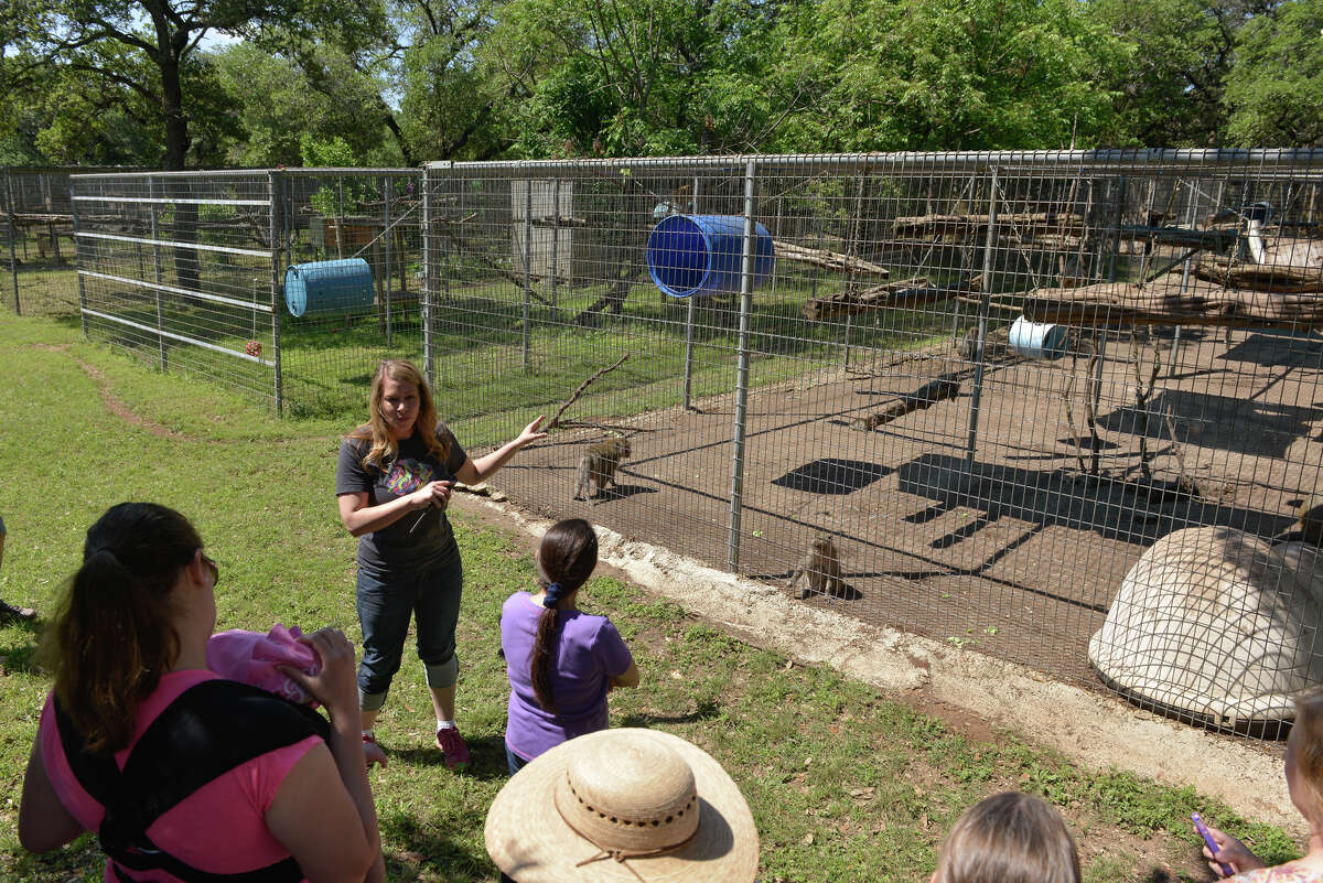 Brooke Chavez, zoologist and the executive director of the 400 animal facility near Boerne, condusts a recent tour.