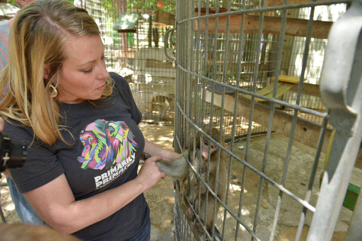 Brooke Chavez, is a zoologist and the executive director of the Primarily Primates facility which houses and cares for over 400 animals.