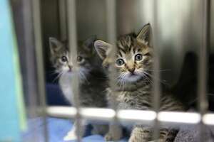 Is drought behind uptick in abandoned kittens? - Photo