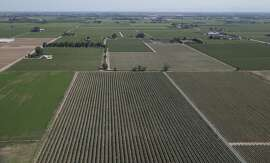 In this photo taken Tuesday, April 28, 2015, is an aerial view of a grape vineyard near Lodi, Calif.  California's Democratic state senators released a letter, Thursday, April 30, 2015, they had sent earlier in the week to Gov. Jerry Brown, urging his administration to get water savings projects started in months instead of years and calling for farmers to step up conservation in the face of a relentless drought.(AP Photo/Rich Pedroncelli)