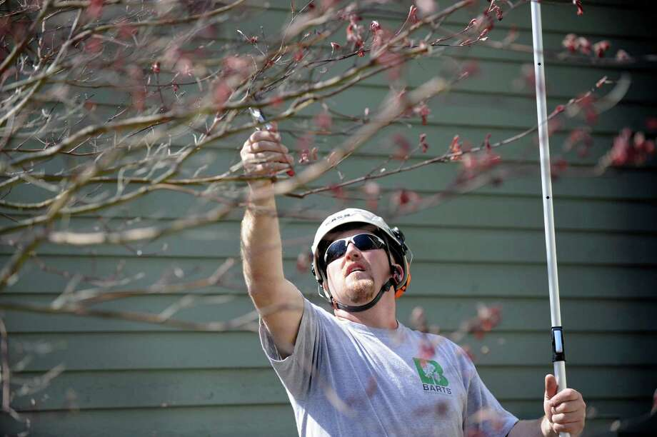 Matt Bartelme, 45, of Danbury, Conn., owner of Barts Tree Service, does structural pruning a a Japanese maple tree at a Newtown home, Monday, May 4, 2015. Photo: Carol Kaliff / The News-Times