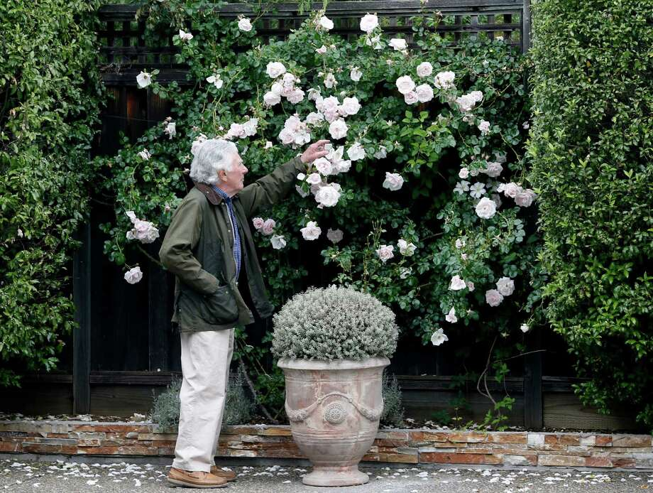 Roses take root in author Anthony Elgin's award-winning Sonoma garden. Photo: Brant Ward / The Chronicle / ONLINE_YES