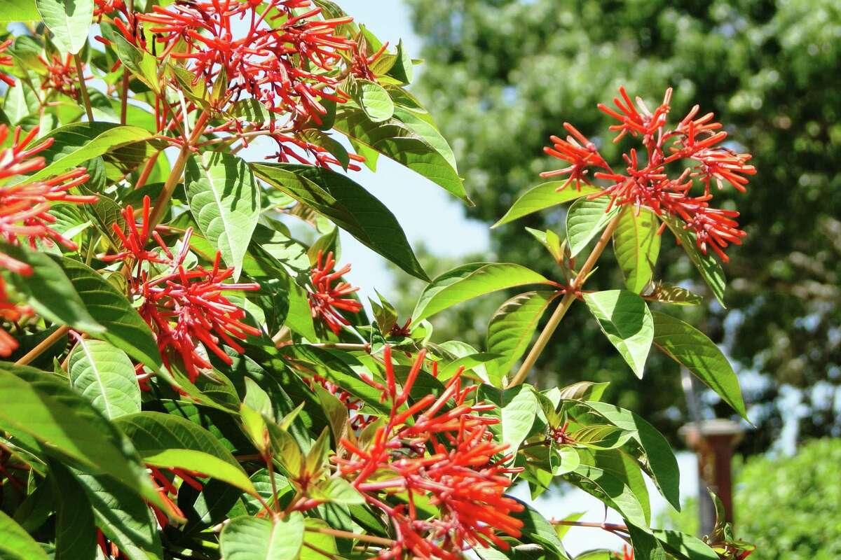 Perennials That Bloom In The Summer Heat Expressnews