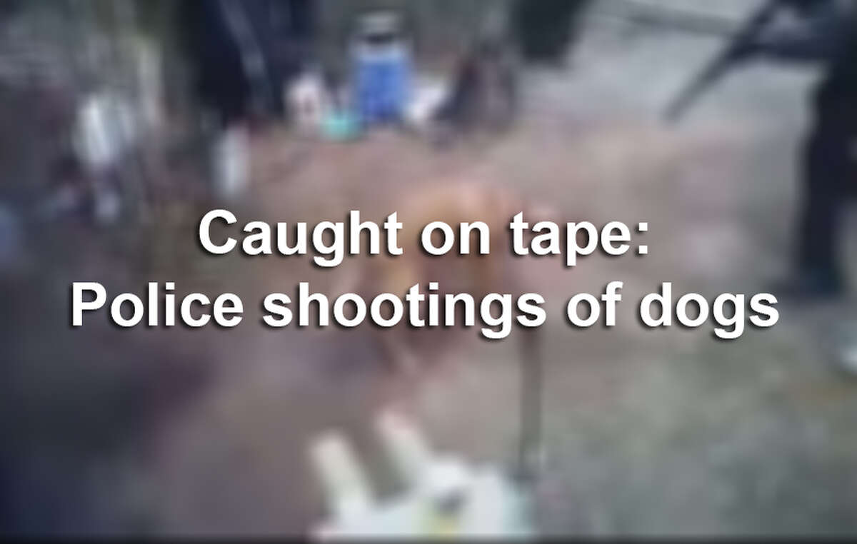 Caught on tape: Police shootings of dogs