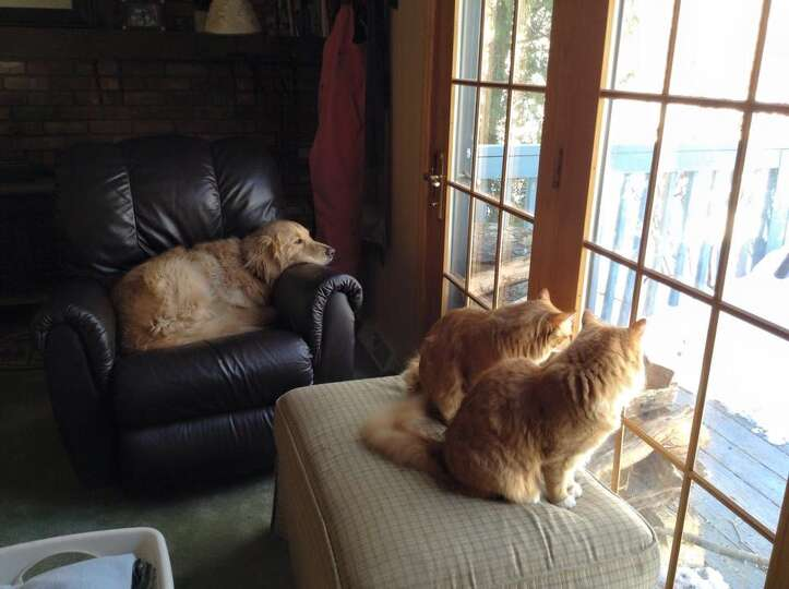 Max is excited to have his furry friends ? the felines Oliver and Owen ? help him with bird-watching