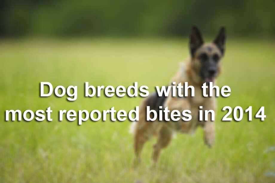 San Antonio Bexar County Warn Residents About Rabies Exposure San