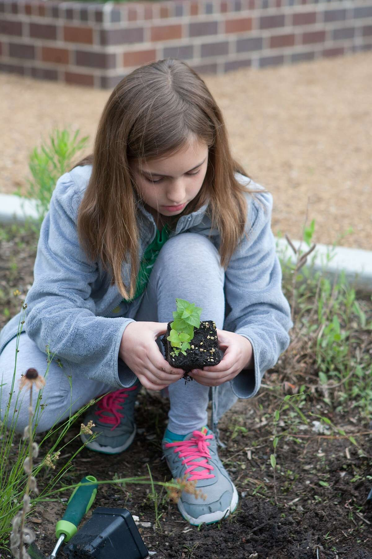 Fourth-grader Cassie Buegler, 10, examines a bee balm plant before putting it into the pocket prairie at Frostwood Elementary School. Fourth-grader Cassie Buegler, 10, examines a bee balm plant before putting it into the pocket prairie at Frostwood Elementary School.