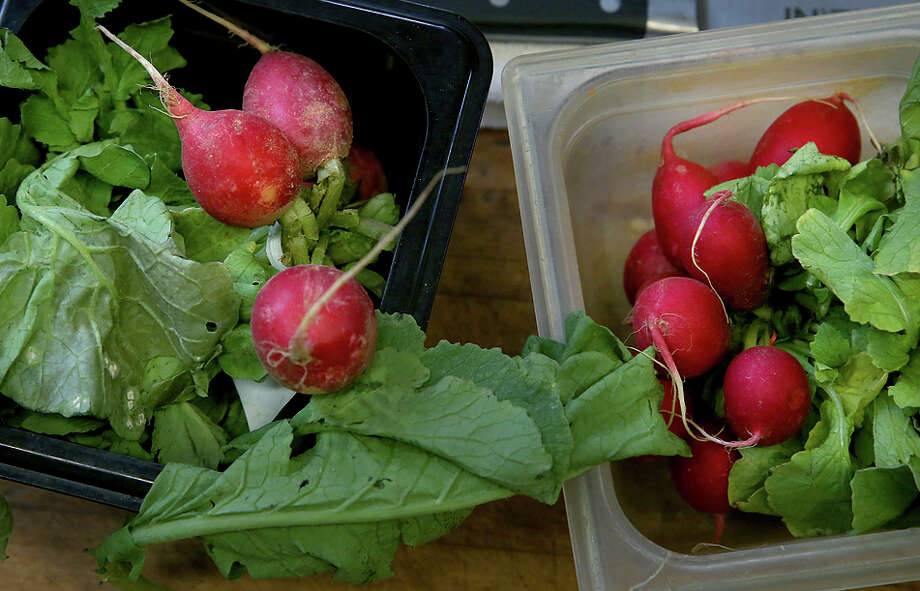 Slightly out-of-the-ordinary radishes from Bon Appetit Management Co.'s Imperfectly Delicious program are at left, next to conventional radishes at right, in the kitchen at the Dominican University dining hall. Photo: Liz Hafalia / The Chronicle / ONLINE_YES