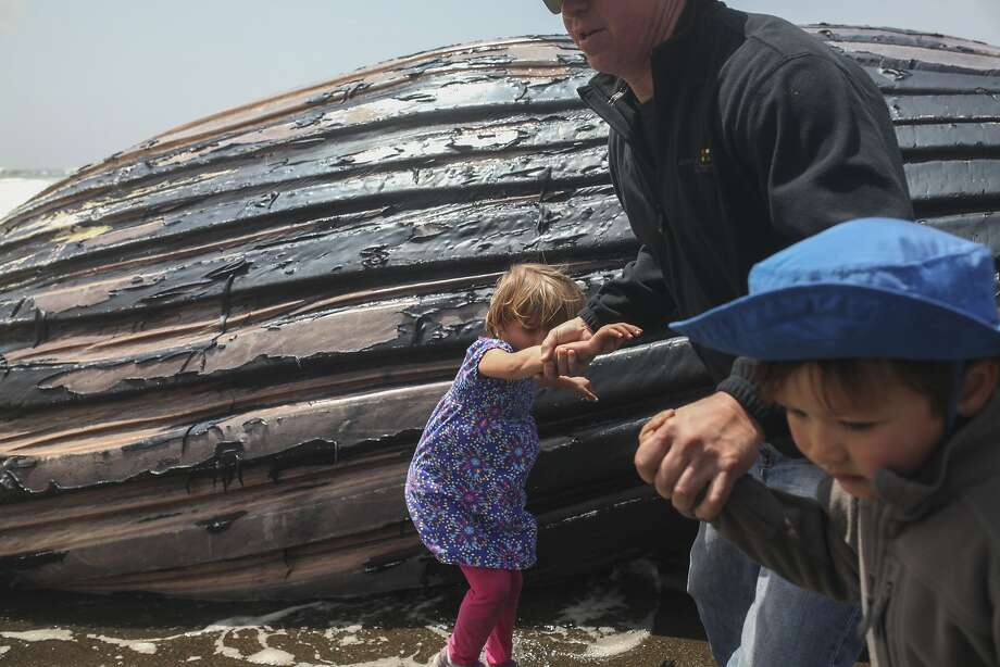 Hannah Hoover and her class mate Lewis Stegink and his father Dan Lewis run away from a dead female humpback whale that washed up on the beach in Pacifica as waves crash onto the shore on May 5, 2015. Photo: Sam Wolson, Special To The Chronicle