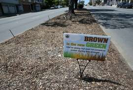 "A sign proclaims that ""Brown is the new Green"" on a median strip at Geary Boulevard and 29th Avenue in San Francisco, Calif. on Wednesday, May 6, 2015. The city stopped watering the grassy strip to cutback on water consumption during the current drought crisis."