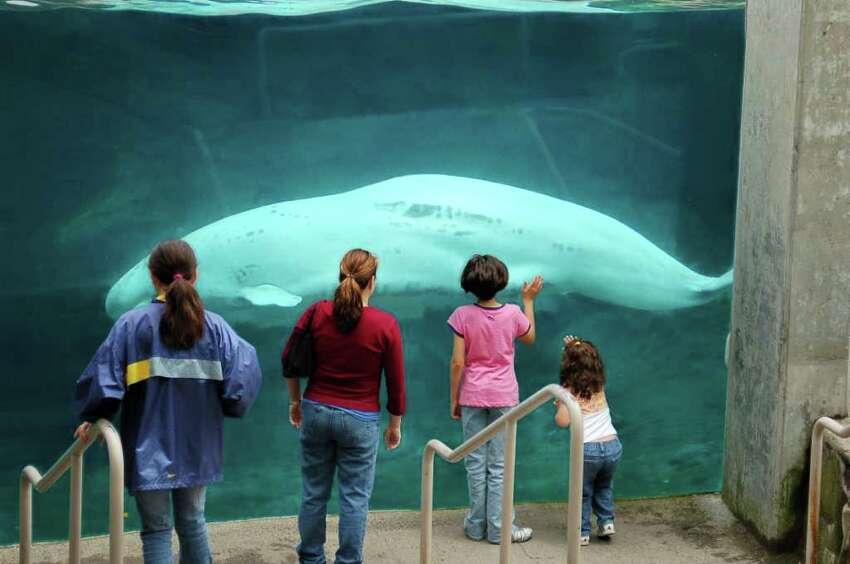 See an exotic array of species at Mystic Aquarium's