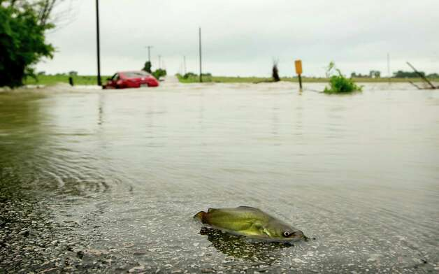 A catfish and a car are stranded on Gregg Lane after heavy rains caused flooding, Wednesday May 6, 2015, in Manor, Texas. (Jay Janner/Austin American-Statesman via AP)  AUSTIN CHRONICLE OUT, COMMUNITY IMPACT OUT, INTERNET AND TV MUST CREDIT PHOTOGRAPHER AND STATESMAN.COM, MAGS OUT  ORG XMIT: TXAUS201 Photo: Jay Janner / Austin American-Statesman