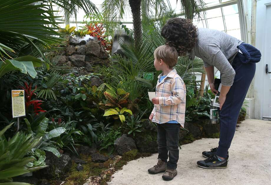 """William Bruce, 3, and Kathlena Gagnon watch a volcanic eruption at the Stranded! Tropical Island Survival exhibit at the Conservatory of Flowers in Golden Gate Park in San Francisco, Calif. on Friday, May 8, 2015. The exhibit which runs until Oct. 18 offers a fun look at how one can survive with the """"life-saving plants"""" that are on display if they suddenly became stranded on a tropical island. Photo: Paul Chinn, The Chronicle"""