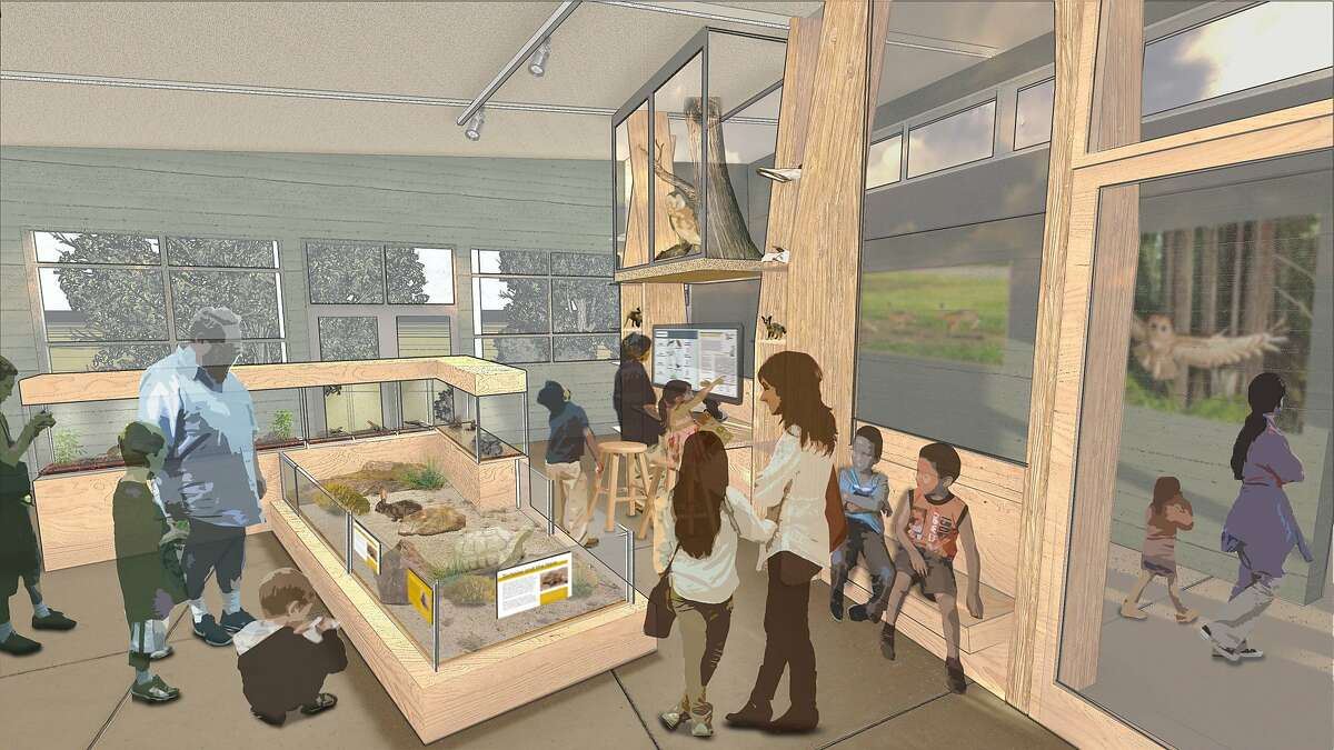 A rendering of the Desert Exhibit in the remodeled Randall Museum in Corona Heights Park