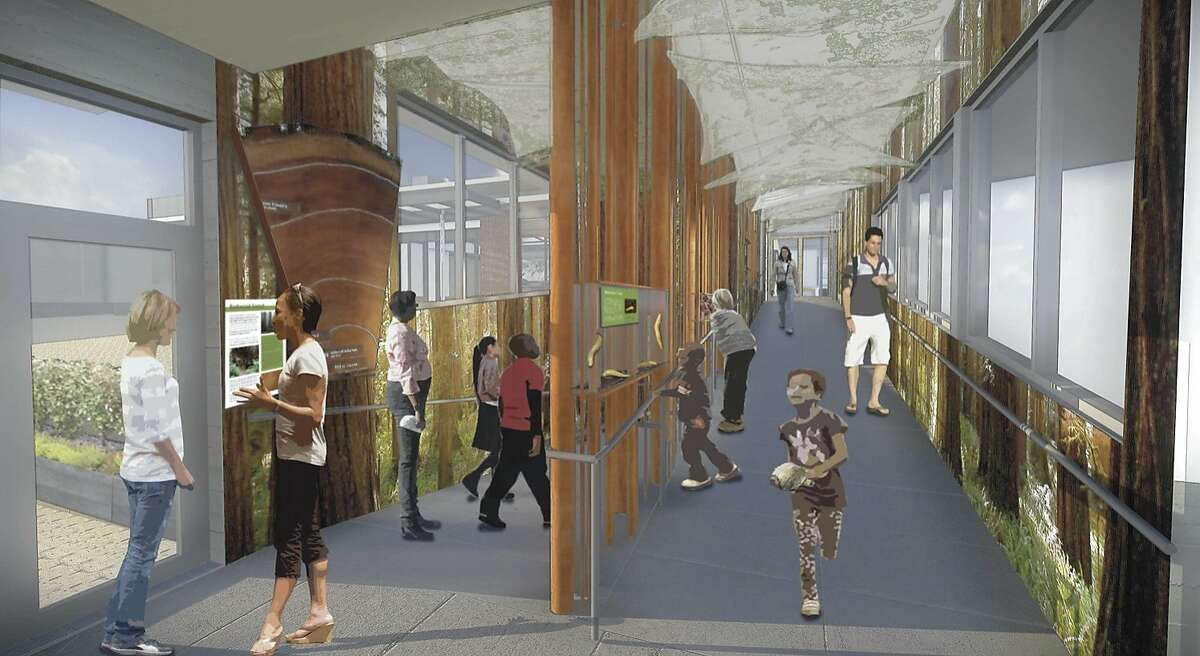 A rendering of the Redwood Trail exhibit in the remodeled Randall Museum in Corona Heights Park
