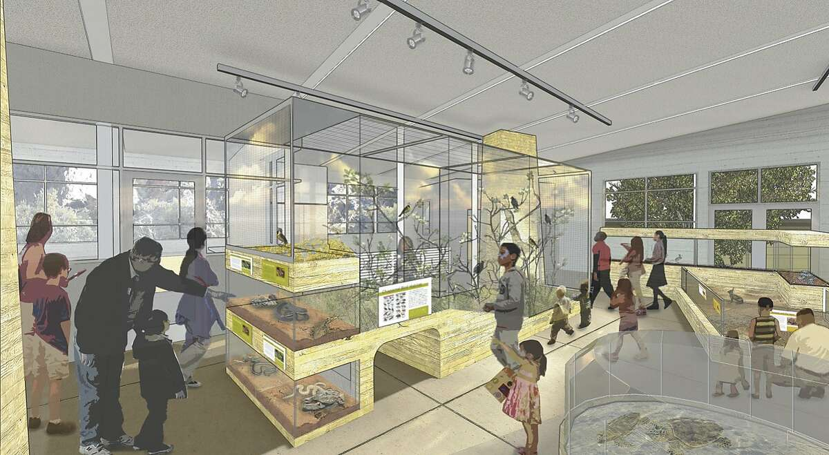 A rendering of the Chapparal exhibit in the remodeled Randall Museum in Corona Heights Park