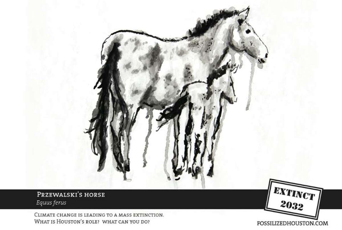 Przewalski's horse, by Laura Lark.