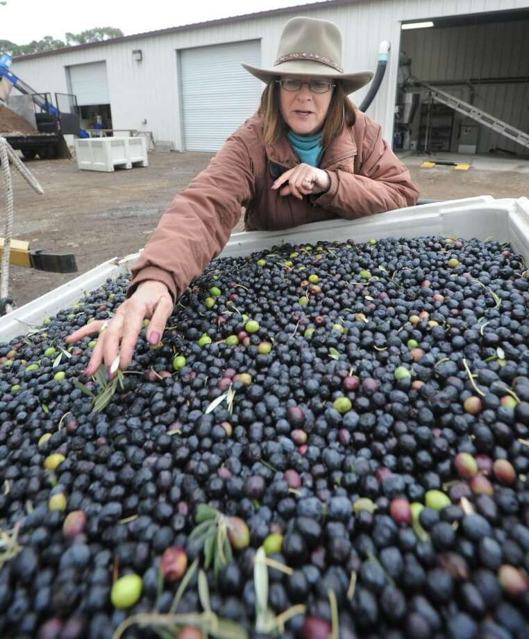 Bundled up against the cold, Kathleen Elliott, of Sunol, owner of Hillcrest Ranch olive oil, inspects her olives before they are crushed at the Olivina olive orchard in Livermore, California, December 8, 2009. Elliott is rushing to crush all her olives because of the cold weather. (Doug Duran/Contra Costa Times/MCT) Photo: Doug Duran, MCT / Contra Costa Times