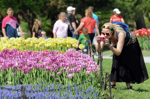 Kari Savage of East Greenbush, right, takes a picture to send to her mother during the 67th Annual Tulip Festival on Saturday, May 9, 2015, at Washington Park in Albany, N.Y. (Cindy Schultz / Times Union) Photo: Cindy Schultz / 00031726A