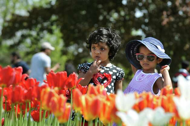 Children stop to see the tulips during the 67th Annual Tulip Festival on Saturday, May 9, 2015, at Washington Park in Albany, N.Y. (Cindy Schultz / Times Union) Photo: Cindy Schultz / 00031726A