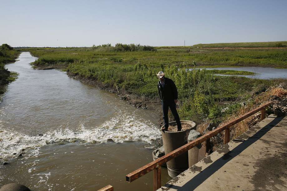 Jacob Katz, Central California Regional Director of California Trout, checks out a canal for trapped salmon, a common occurrence in the area, in the Yolo Bypass flood area near the Fremont Weir April 14, 2015 outside of Woodland, Calif. The Yolo Bypass is one of two flood bypasses created to protect Sacramento from flooding during rainy seasons. Photo: Leah Millis, The Chronicle