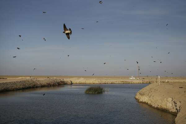 Blame the drought: Wildlife disappearing in Tulare Basin